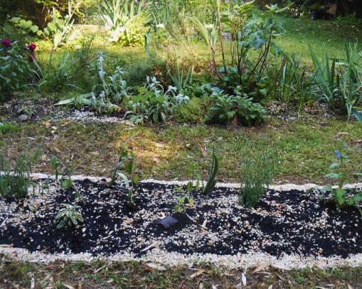 May 20, 2015 garden 017