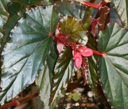 May 25, 2015 foliage 049