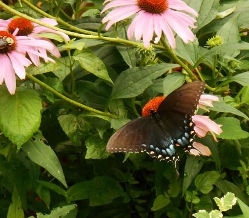July 13, 2015 flowers 036