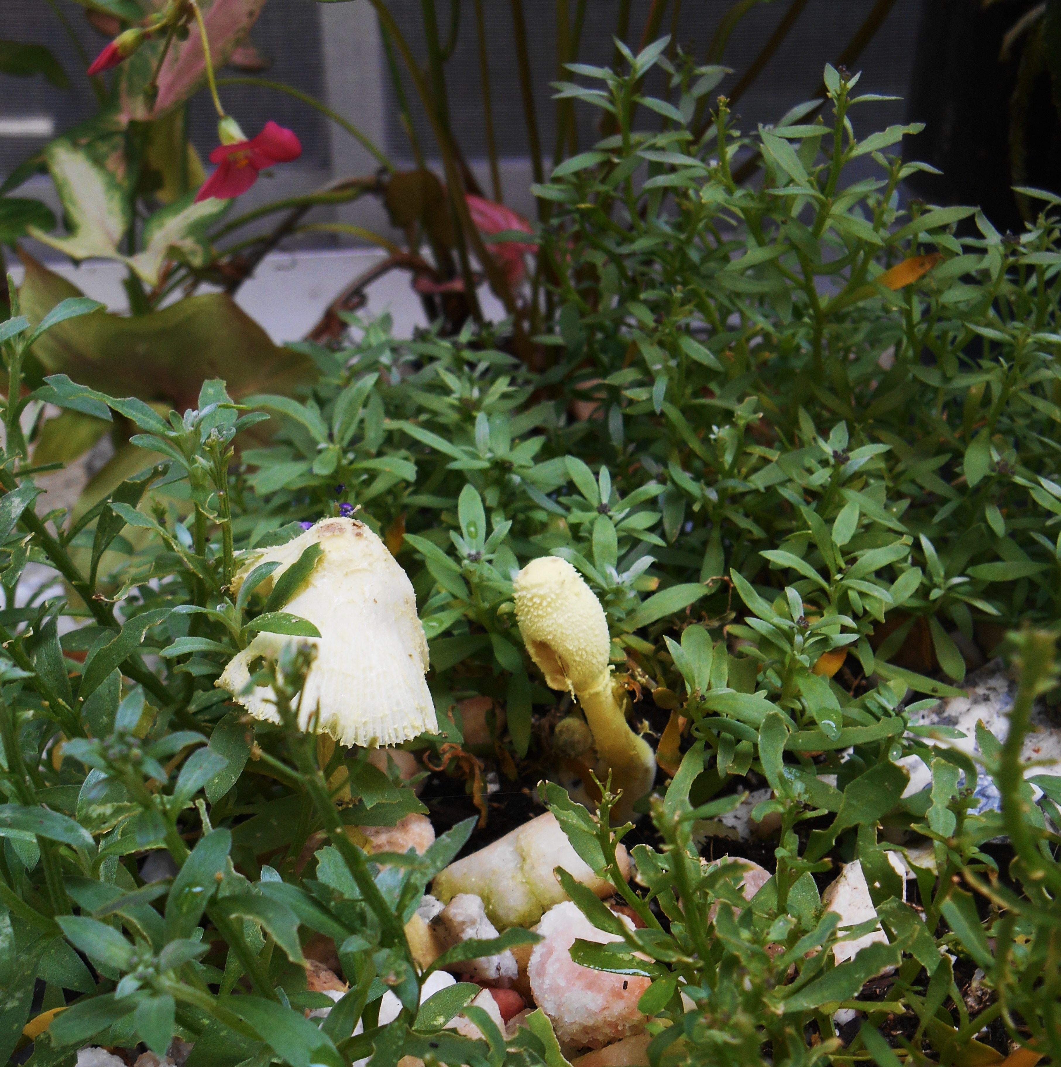 July 18, 2015 fungus 001