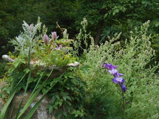 July 2, 2015 garden 007