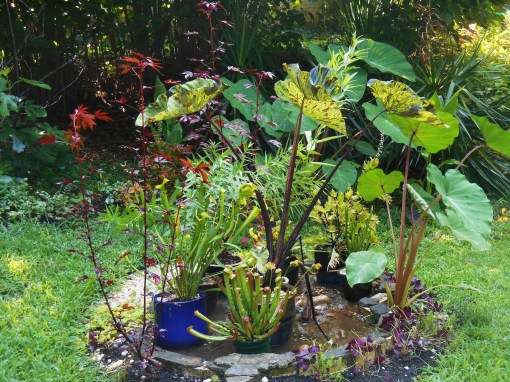 Our 'bog garden' got more sun last year than it does this year. The plants all started in pots, though I moved a few into the soil as the summer progressed.