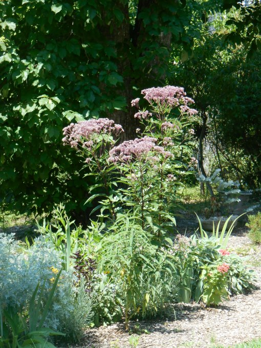 July 21, 2015 garden midday 002