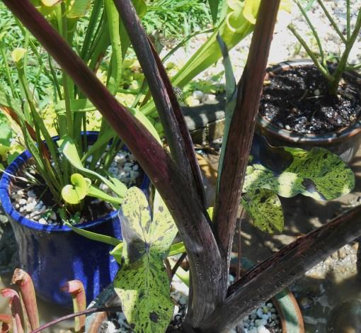 July 26, 2015 garden 005