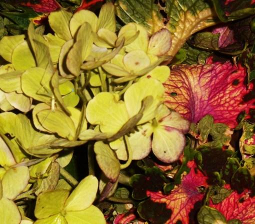 July 27, 2015 hydrangea vase 004