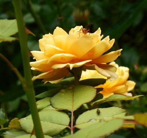 July 5, 2015 garden 030