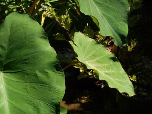 August 12, 2015 damp garden 009