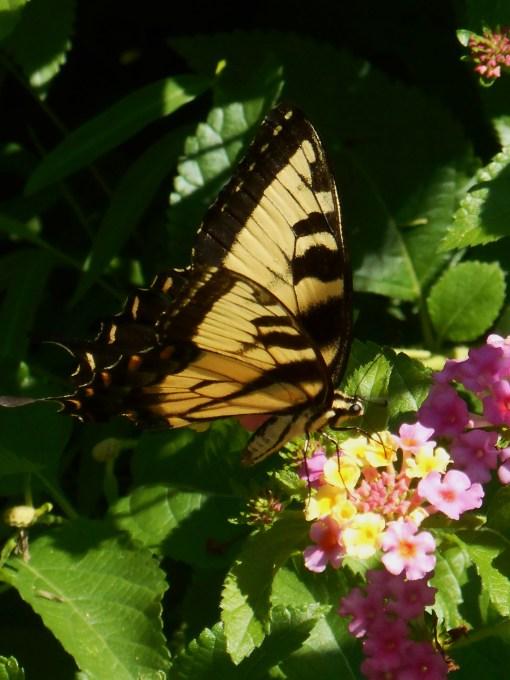 August 15, 2015 Gardens 025