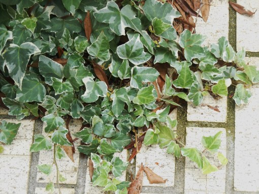 Variegated ivy scampers onto the porch.
