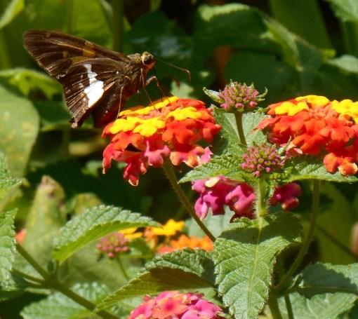 August 30, 2015 garden 025