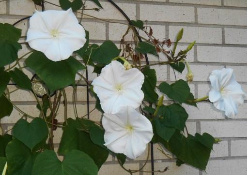September 14, 2015 garden 022