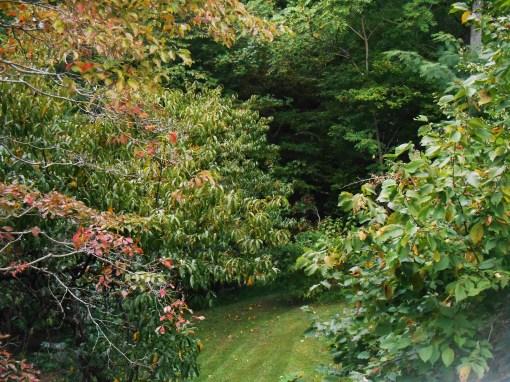 September 25, 20015 foliage 024