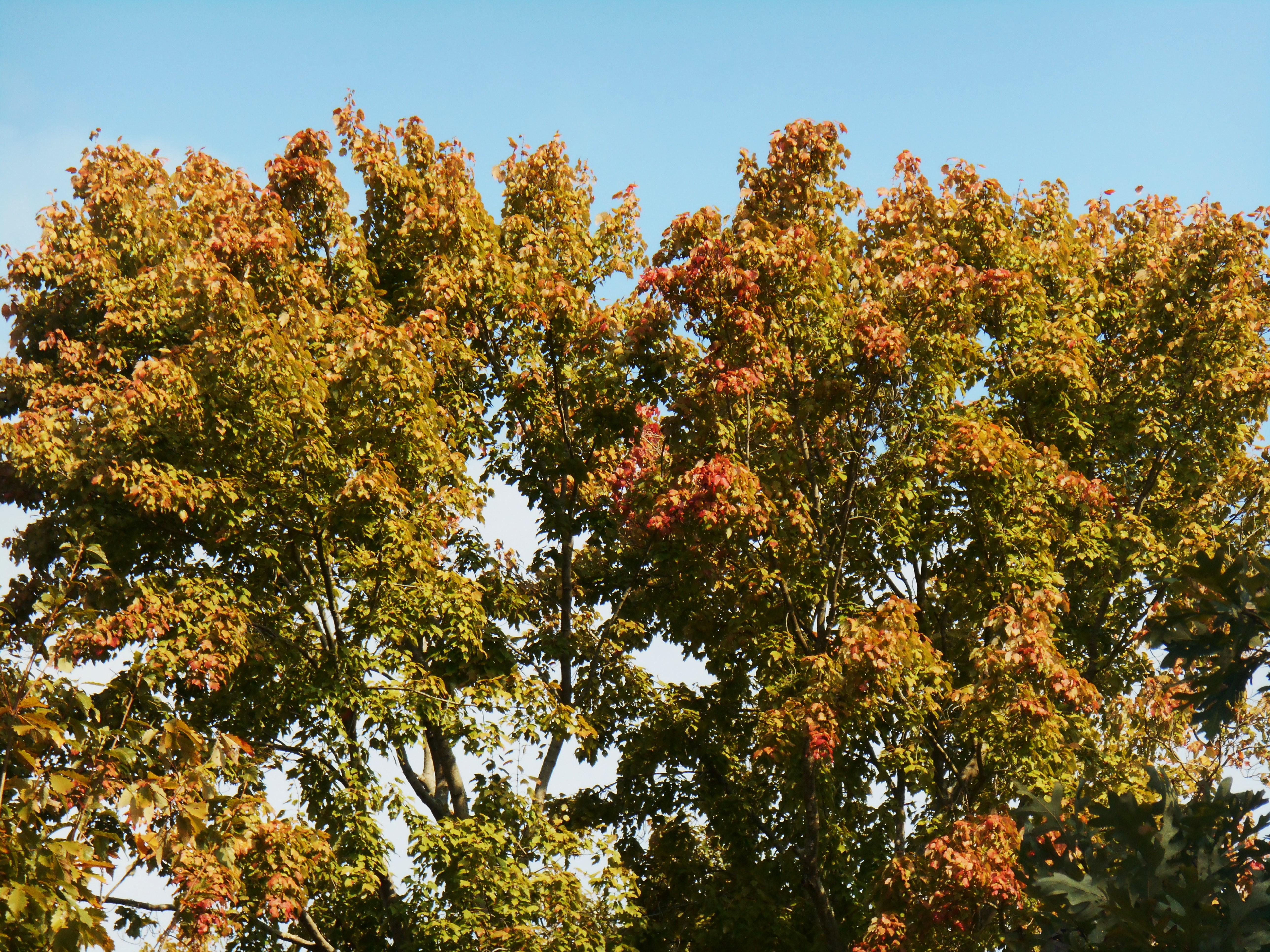 October 23, 2015 trees 024