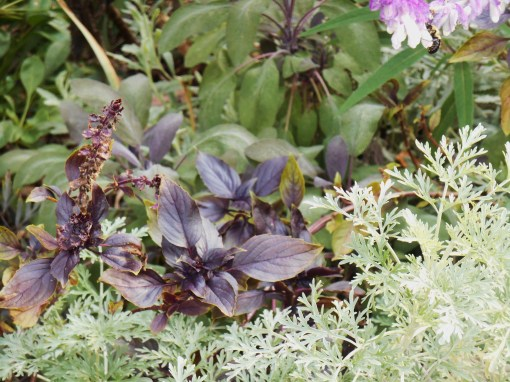 Herbs mixed with perennials help keep harmful insects, like chiggers and ticks, away from garden beds.