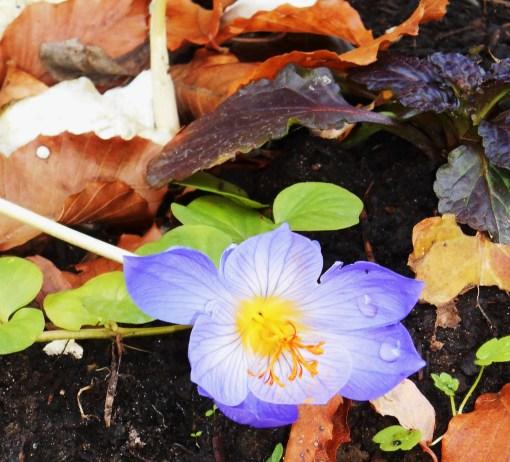 October 30, 2015 flowers 004