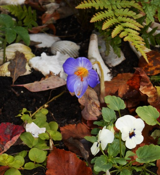 October 30, 2015 flowers 007