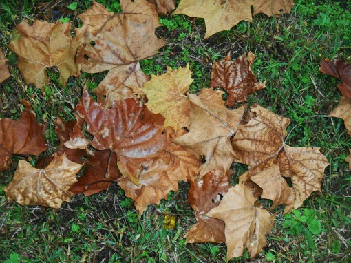 November 1, 2015, fall drive 002