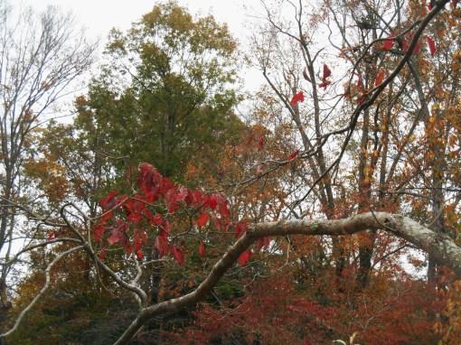 November 10, 2015 autumn 003