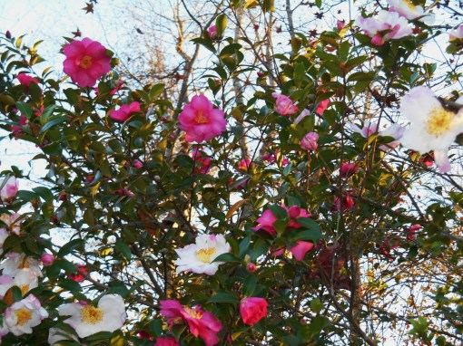 November 14, 2015 planting 030