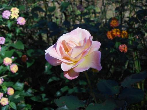 November 16, 2015 blooming 007