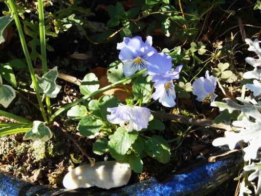 November 16, 2015 blooming 008