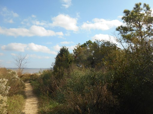 The path to a beach along the James River; a favorite spot for fishing and sunbathing.