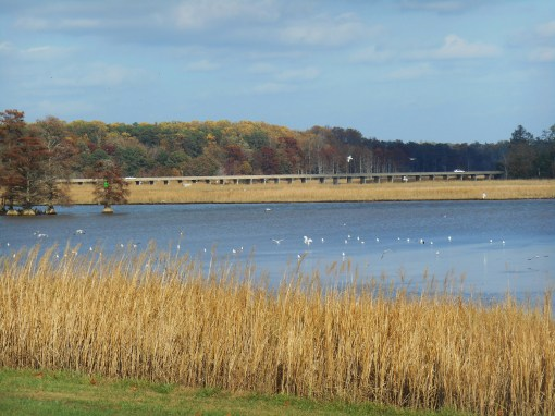 Sandy Bay, at the bridge onto Jamestown Island.