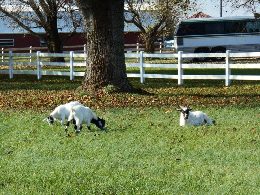 Escapees from the Gospel Spreading Farm along the Parkway, near Jamestown Island.