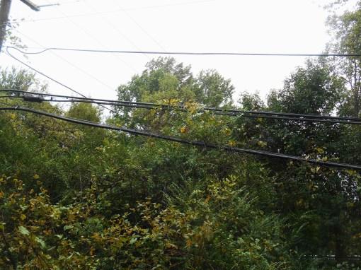October 3, 2015 wet day 001