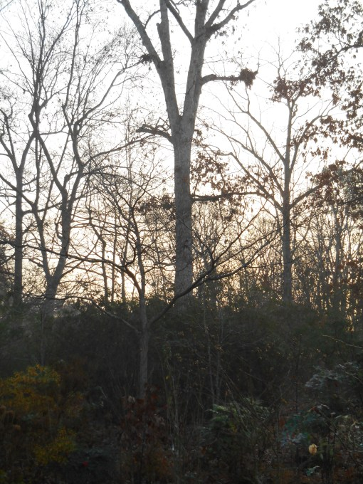 December 12, 2015 sunrise 002