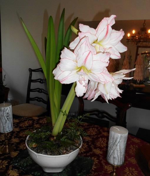December 21, 2015 flowers 001