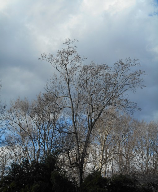 January 10, 2015 leaves 009