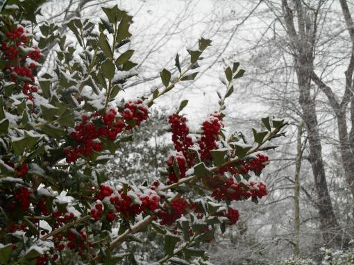 January 17, 2016 snow 039