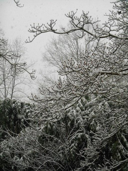 January 17, 2016 snow2 005