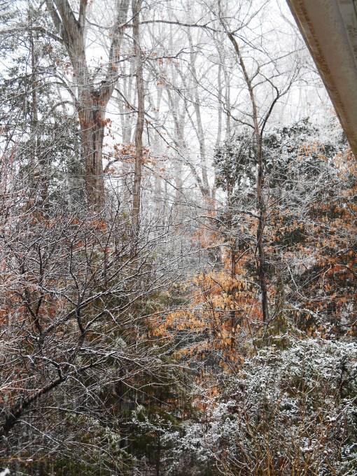 January 17, 2016 snow2 016