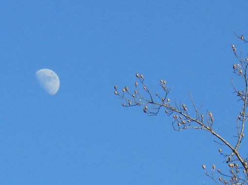We enjoyed clear skies, brilliant sunshine, and very cold winds today. How wonderful to see a clear blue sky.