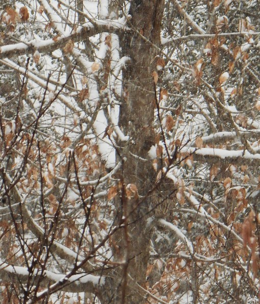 Can you spot our owl, who calls from the ravine?