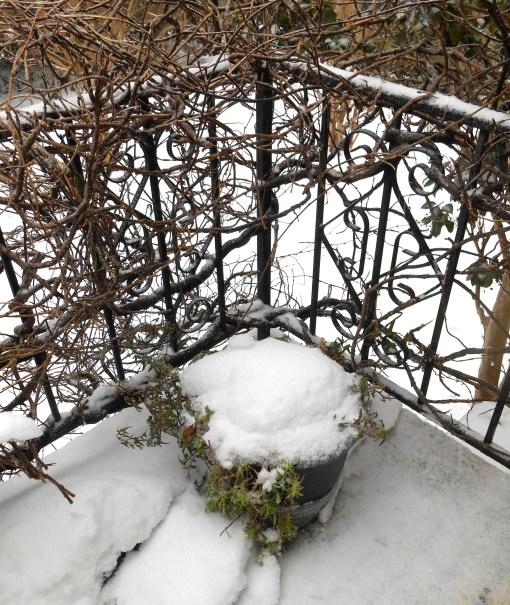 January 23, 2016 snow 001