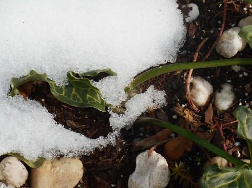 January 25, 2016 snow 009
