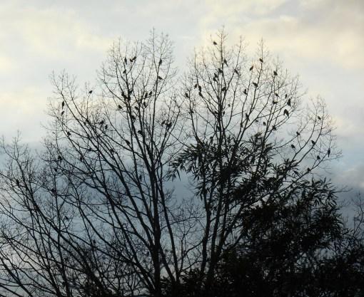 February 1, 2016 The Birds 009
