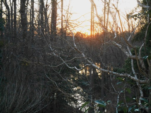 Our pond at sunset last Saturday. February 12, 'Green""