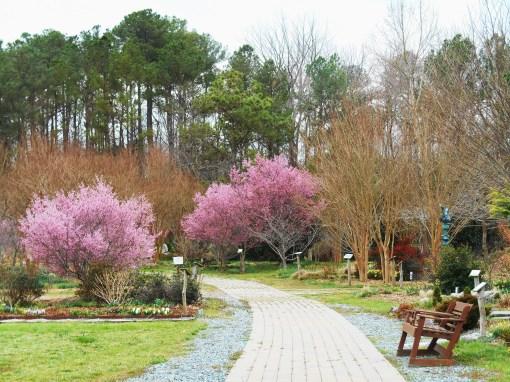 March 11, 2016 gardens 008