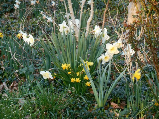 March 15, 2015 flowers 003