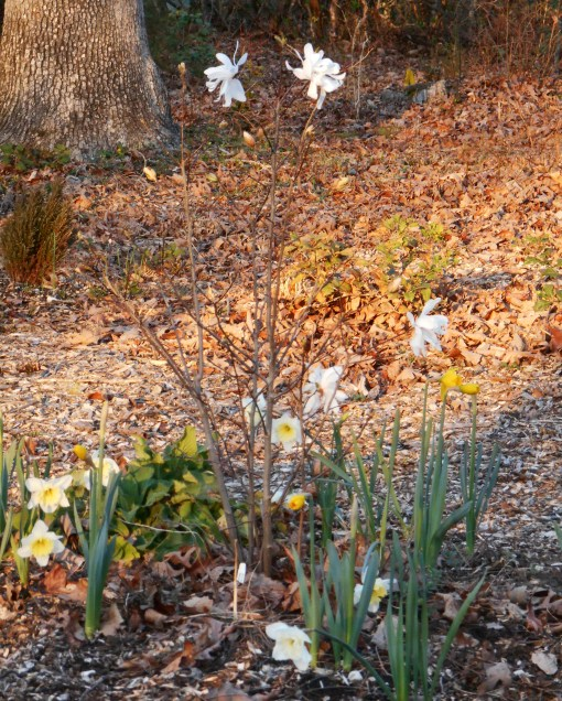 March 15, 2015 flowers 022