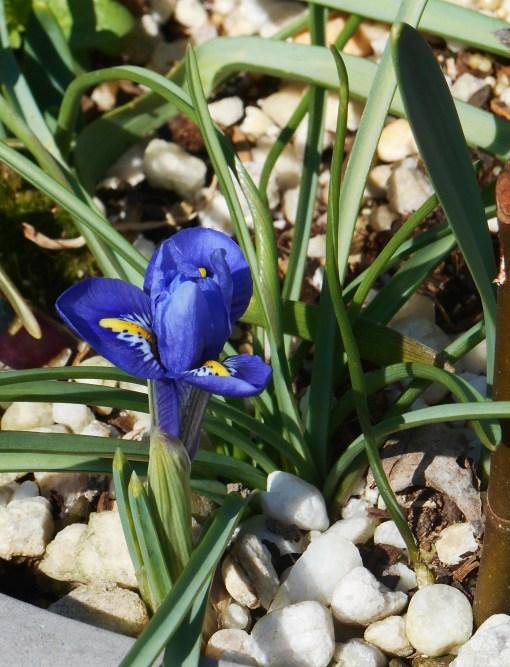 March 2, 2016 Iris 003