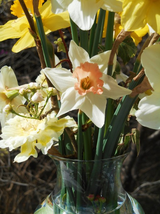 March 20, 2016 spring flowers 022