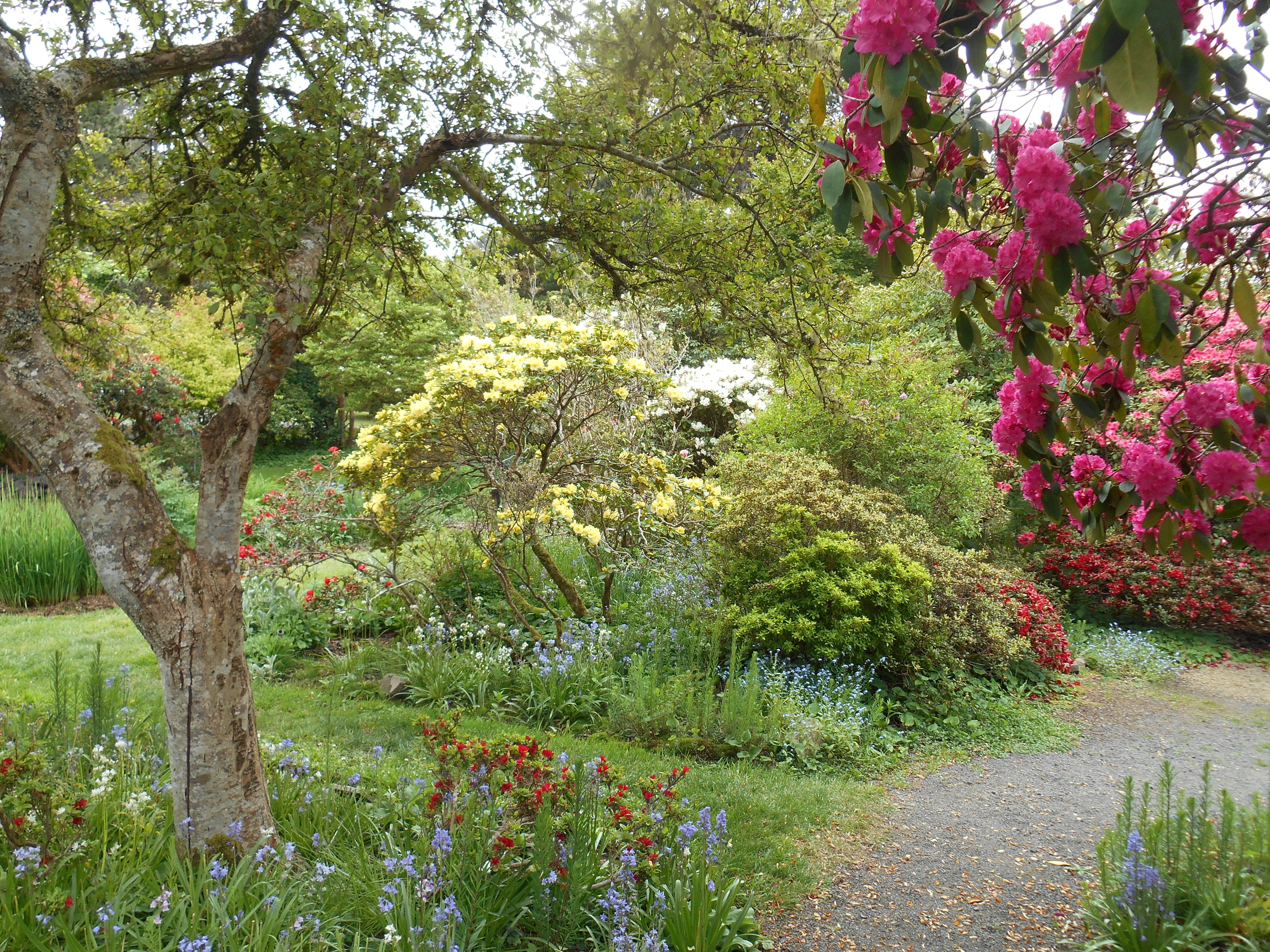 The Connie Hansen Garden