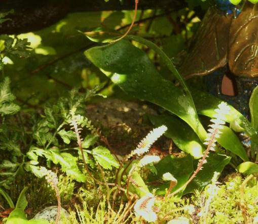 May 23, 2016 fern garden 003