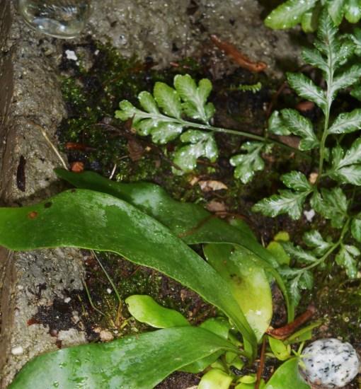 May 23, 2016 fern garden 004