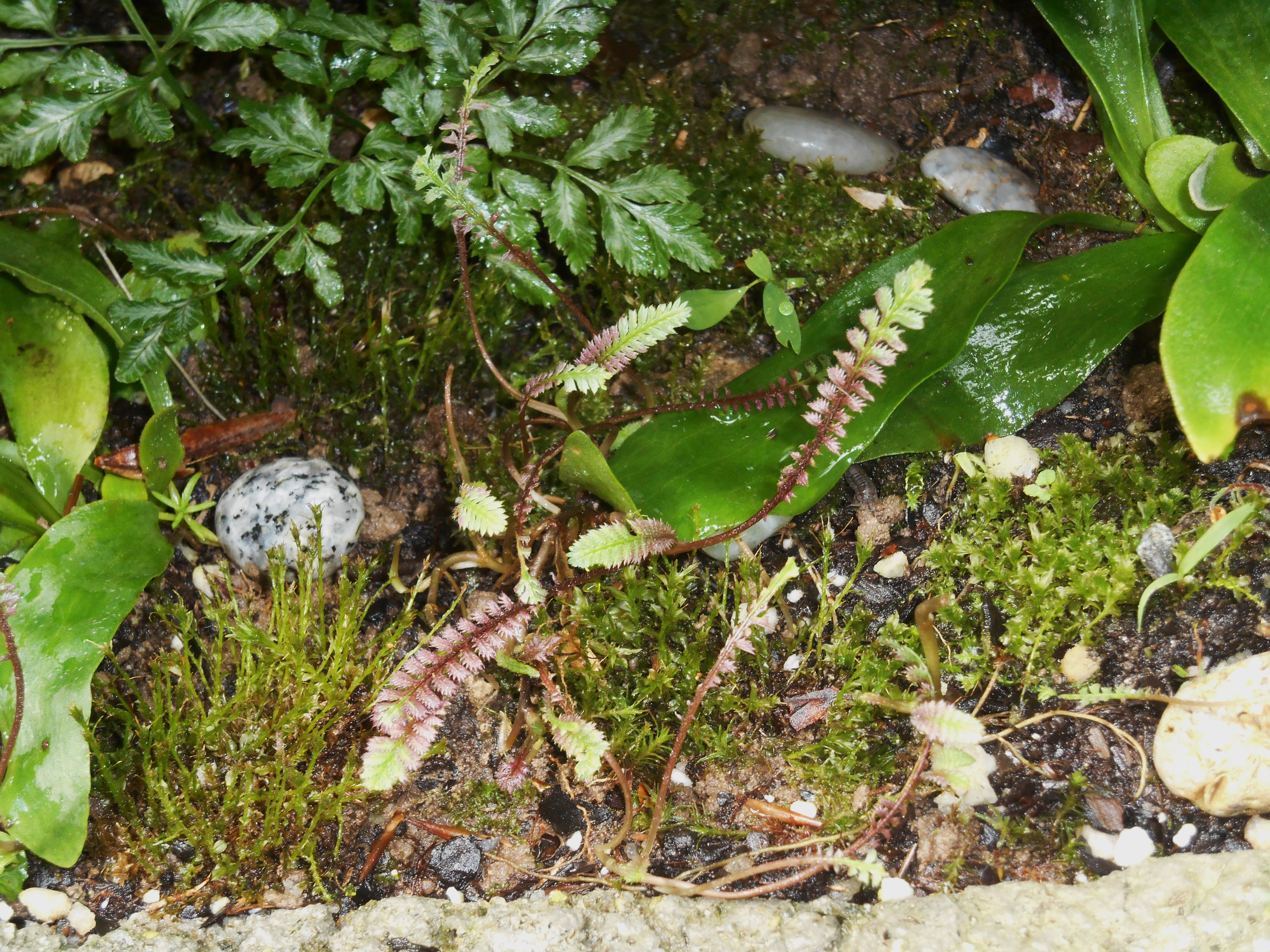 May 23, 2016 fern garden 005